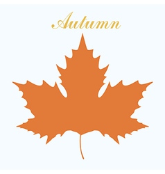 maple leaf design vector image