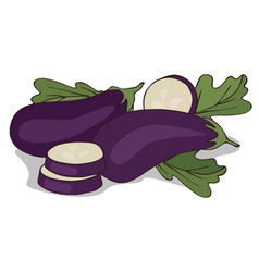 Isolate aubergine or eggplant vector