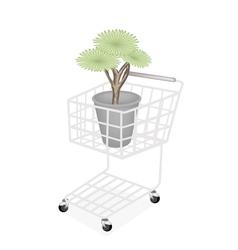 Beautiful Dragon Tree in A Shopping Cart vector