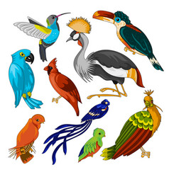 Big set of exotic birds vector
