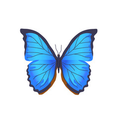 butterfly of blue color poster vector image