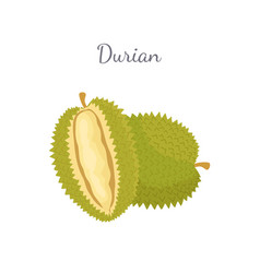 durian exotic juicy thailand malaysia fruit icon vector image