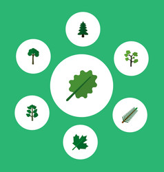 Icon flat bio set of spruce evergreen rosemary vector