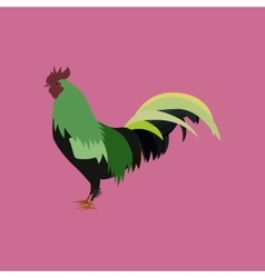 in flat style cock vector image