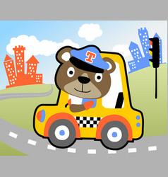 nice bear cartoon taxi driver vector image