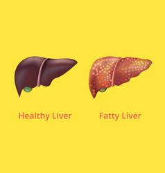 realistic detailed 3d liver human internal organs vector image