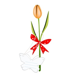 A Fresh Orange Tulip with Red Ribbon vector image