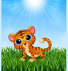 Cartoon baby tiger in the grass on a background of vector