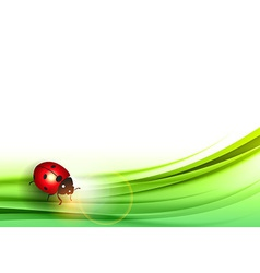 ladybird on green vector image