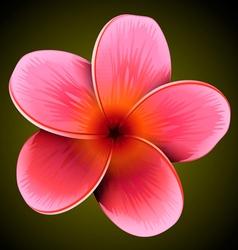 Plumeria flower vector