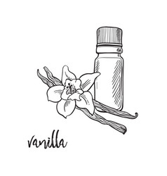 Vanilla flower and bootle spicy vector
