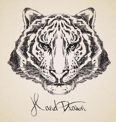 tiger sketch vector image
