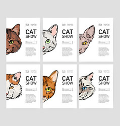 Collection of flyer or poster templates for cat vector