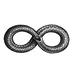 Infinity snake vector