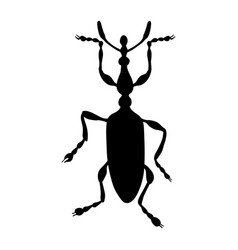 Weevil silhouette isolated on white background vector