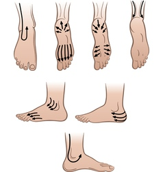 mens feet with massaging lines vector image