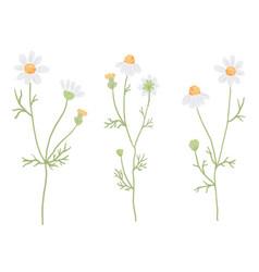 beautiful minimal hand drawn white chamomile vector image