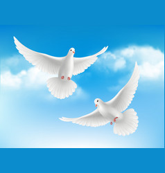Bird in clouds flying white pigeons in blue sky vector
