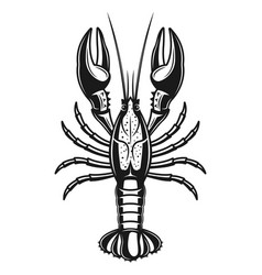 crayfish detailed monochrome vector image