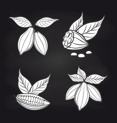 cocoa beans with leaves on blackboard vector image