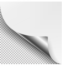 curled silver metalic corner white paper vector image