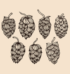 engraving style hops set vector image