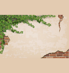 ivy on weathered wall background vector image