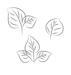 Leaves three vector