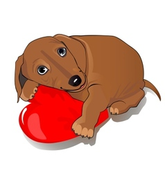 Dachshund dog heart vector image