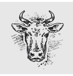 head cow vector image
