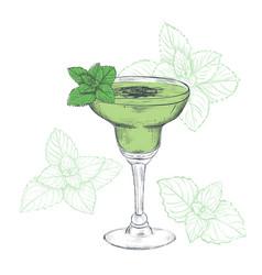 mint cocktail sketch vector image