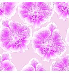 seamless texture orchid phalaenopsis purple-white vector image