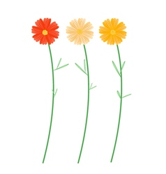 Yellowe and Orange Cosmos Flowers vector