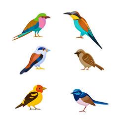 A set of birds vector