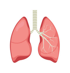 Lung human icon respiratory system healthy lungs vector