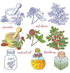 Medicinal herbs 2 vector