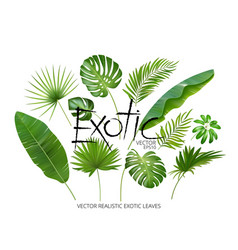 tropical exotic leaves realistic jungle vector image vector image