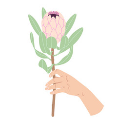 Female hand holding branch of pink protea vector