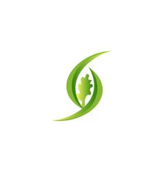 letter s and oak logo designs inspiration vector image