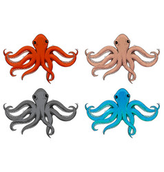 Octopus hand drawn colored sketch vector