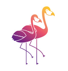 Two pink flamingo bird exotic image vector