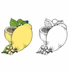 lemon illustration vector image