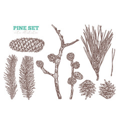 coniferous hand drawn set vector image