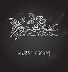 Hand drawn horse gram vector