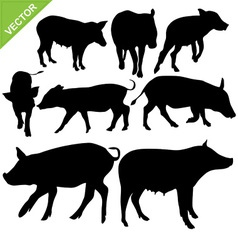 Pig silhouettes vector image