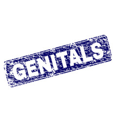 Scratched genitals framed rounded rectangle stamp vector