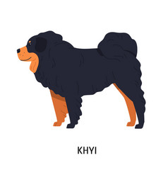 Tibetan mastiff or drog-khyi fluffy pastoral or vector