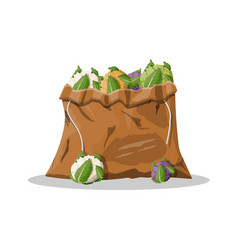 cauliflower vegetable in canvas bag vector image