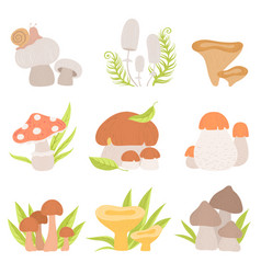 different kinds of forest mushrooms set edible vector image