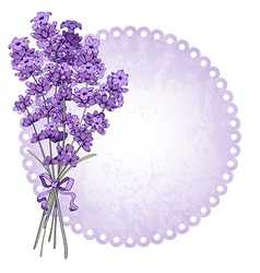 Lavenders vector image